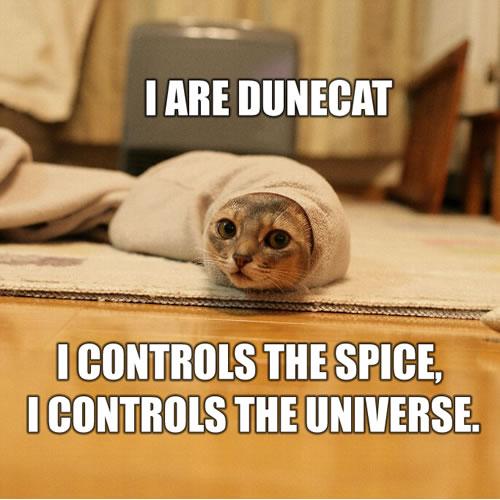 I-are-dunecat